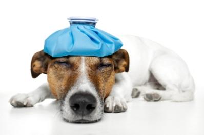 Perros-y-vacunas